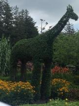 Giraffe topiary